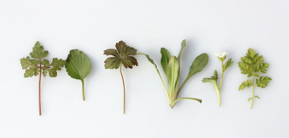 Best herbs for high blood pressure