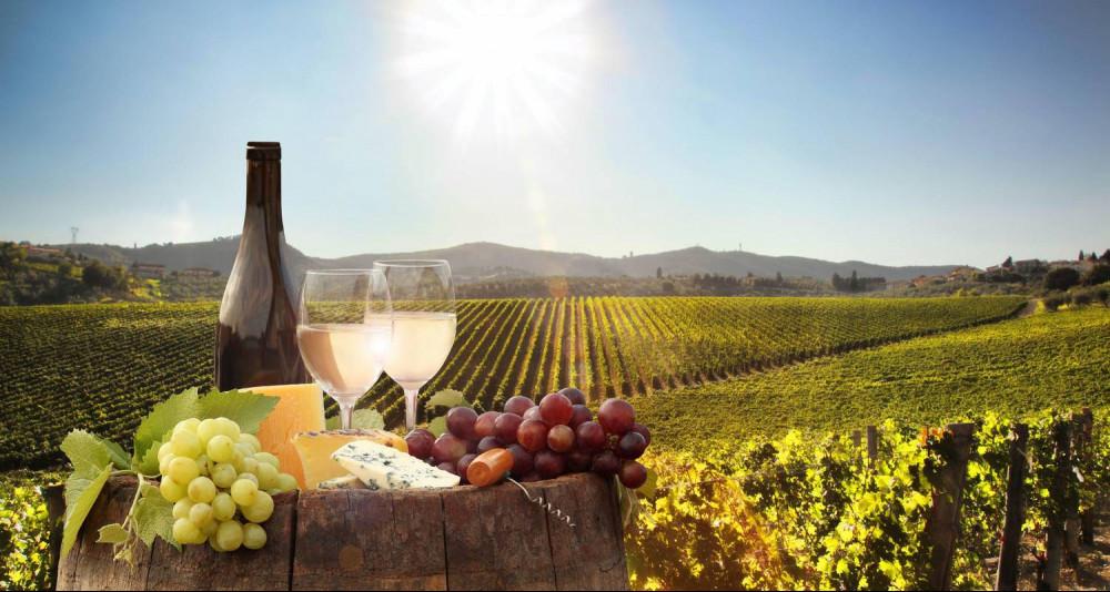 Cape Town Wine Tour
