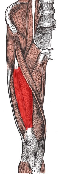 Quadriceps are usually weak in old people