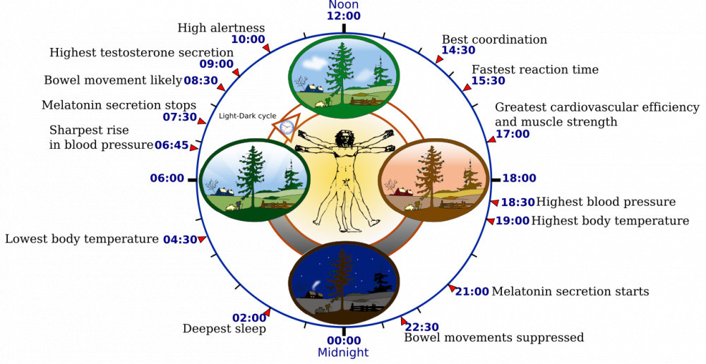Circadian Cycle