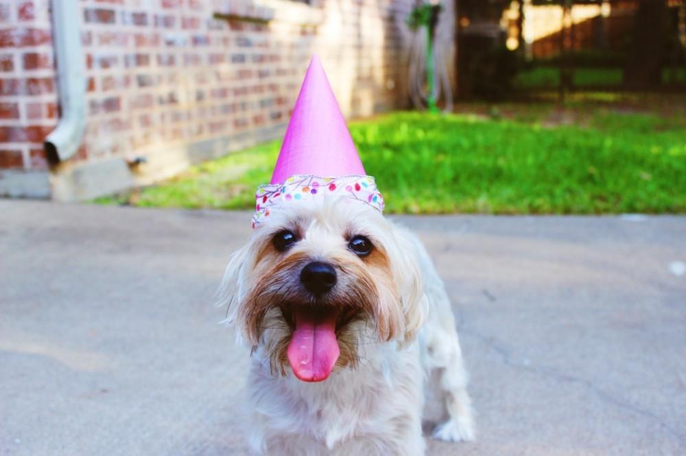 Dog celebrating!