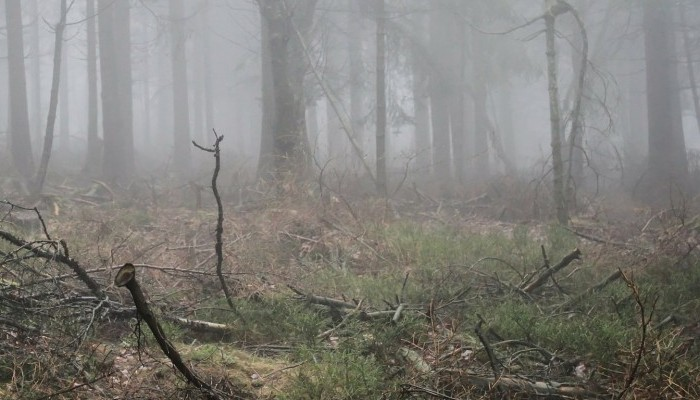 Making Your House Peaceful   Household Chore List   fog and fallen branches strewn across the ground