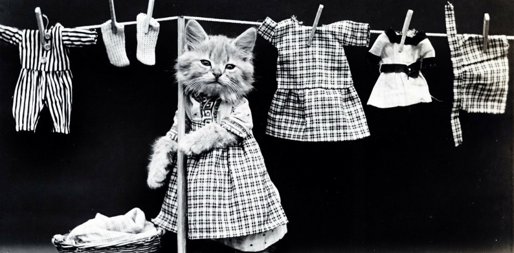Making Your House Peaceful | Household Chore List | A kitten in a dress looks frustrated and is hanging clothes on a clothesline.