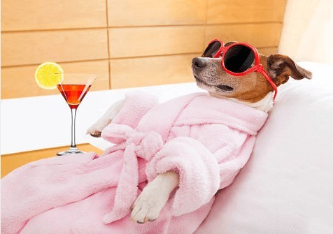 Brown dog wearing pink bathrobe and red oversized sunglasses relaxing on sofa with a martini