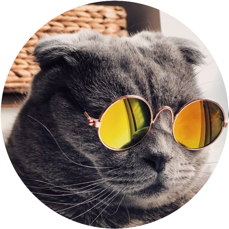 Cat with Mirror Glasses