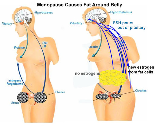 "<img src-""menopause chart.jpg"" alt=""losing weight through menopause""/>"