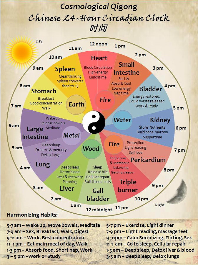 """<img src=""""circadian chart.jpg"""" alt=""""what is the best time to exercise and lose weight""""/>"""