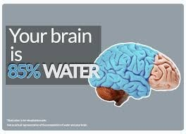 Drinking more water is good for the brain
