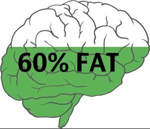 Brain-Fat-Percentage