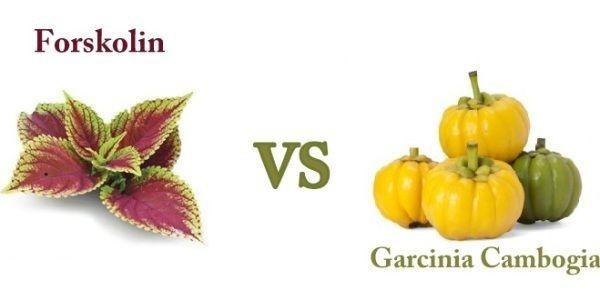 forskolin VS garcinia-cambogia