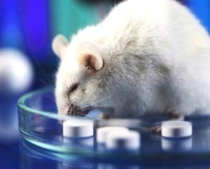 mouse studies weight loss pills