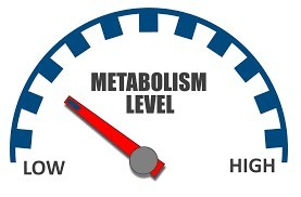 metabolism level scale