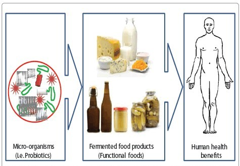 fermentation-technology-human-health