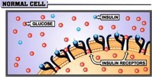 absorption of insulin