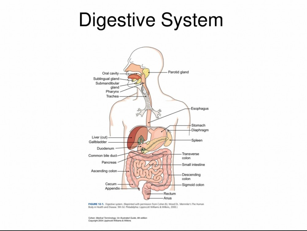 help your digestive system