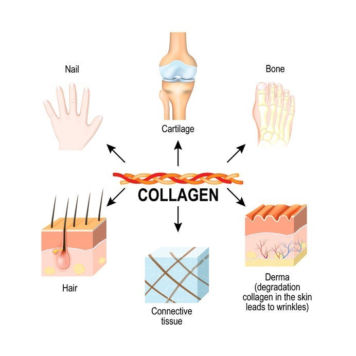 what is collagen for