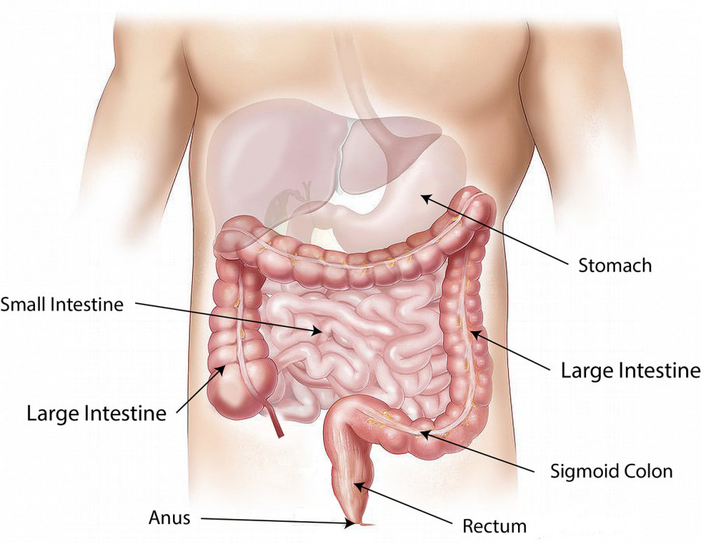 The Importance of Keeping Your Colon Clean