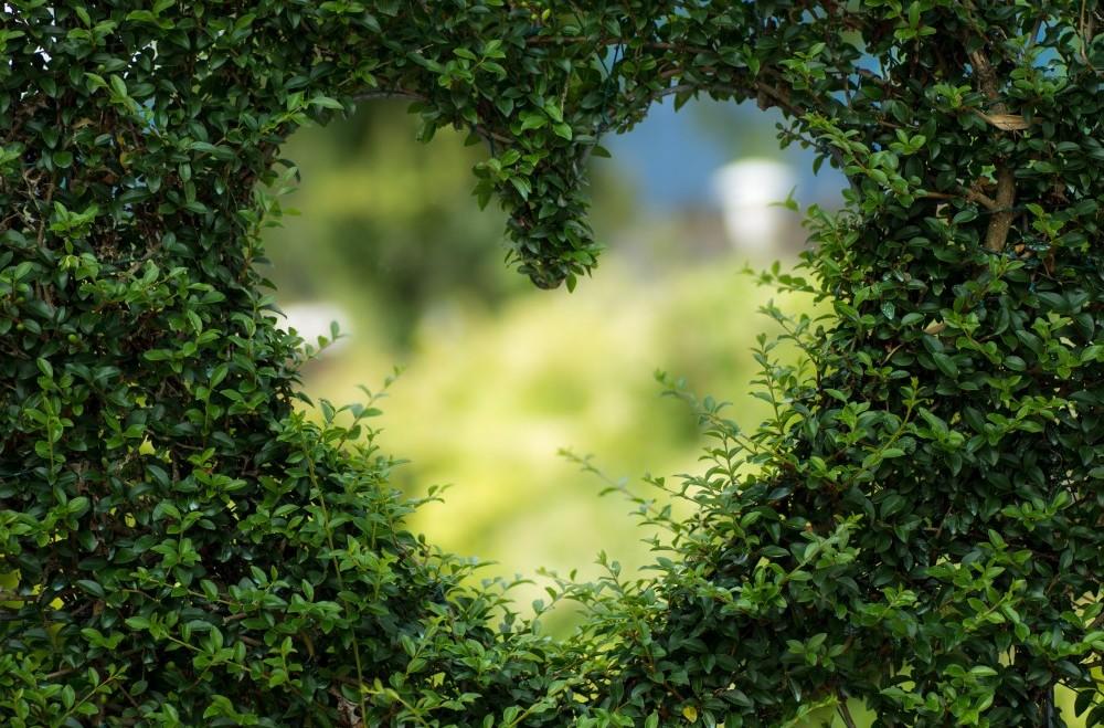 Nature's Loving Embrace
