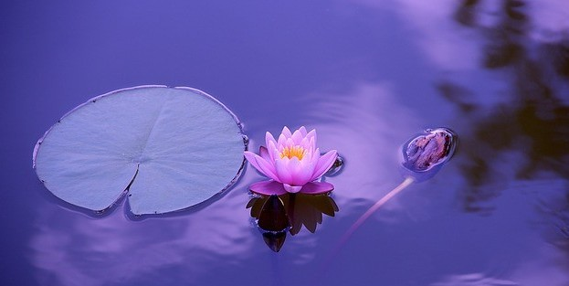Practice Mindfulness - Open Yourself to Miracles