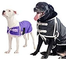 Click to buy Derby Waterproof Insulated Dog Coat