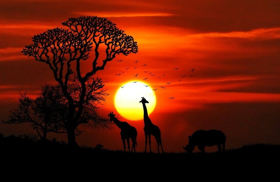 animals in the forest at sunset