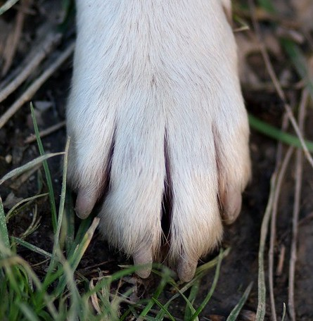 Close up picture of a dog's paw