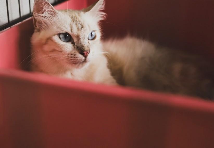 Adult cat in red plastic bin