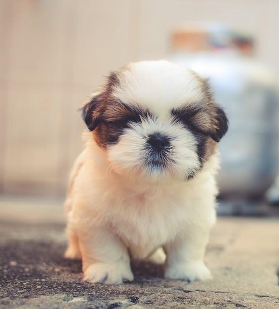 Puppy standing looking like he is falling alseep