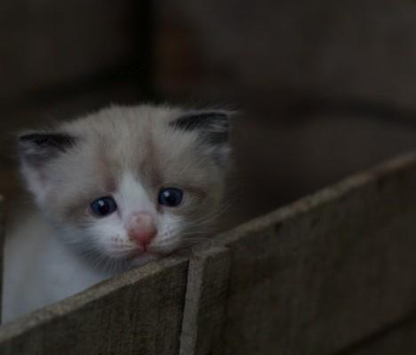 kitten in a wooden box