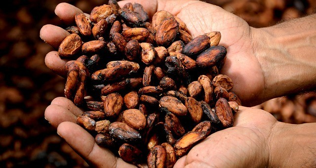Cacao Whole Beans. Photo by dgchocolatier