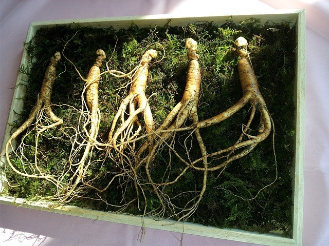 Ginseng. Photo by markroad1230