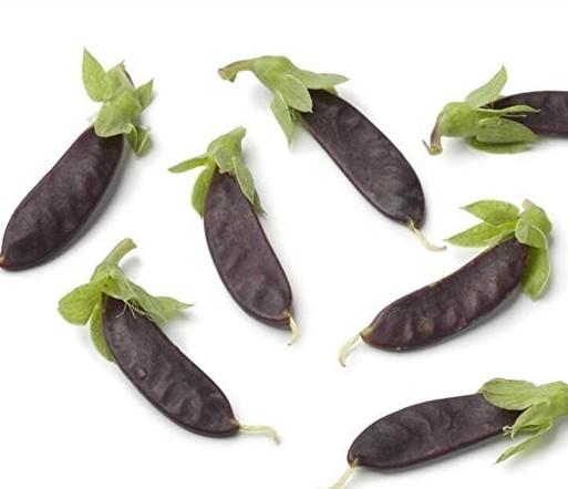 Vastravel Snow Pea Purple NON-GMO Vegetable 20 Seeds at Amazon