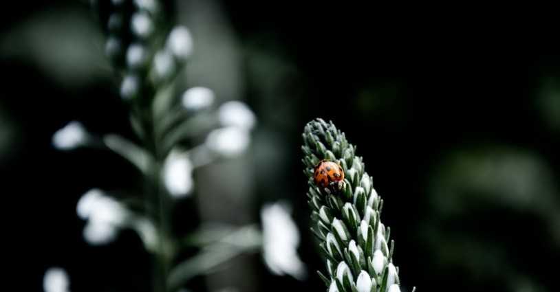Lady Bug on plant. Photo by Bart Christiaanse