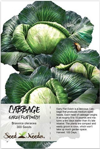 Package of 300 Seeds, Early Flat Dutch Cabbage (Brassica oleracea) Non-GMO Seeds at Amazon