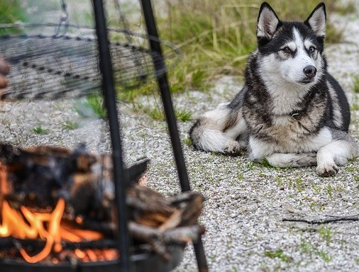 Dog and Fire