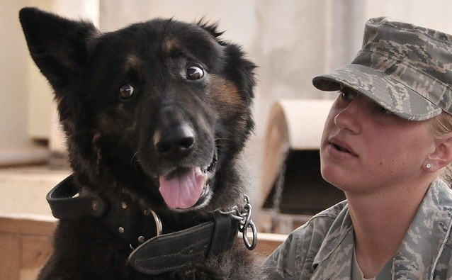 Military and dogs