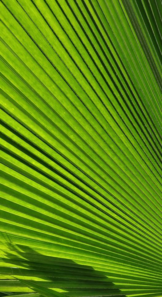 The pineal gland wants green veggies