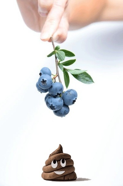 smooth poops likes blueberries