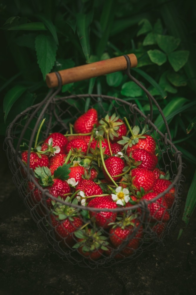 berries from the earth