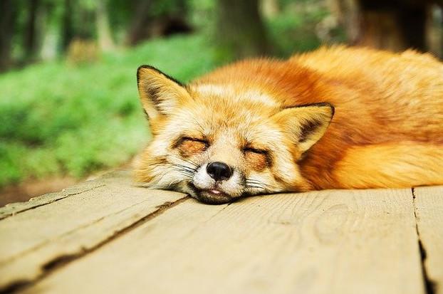The pineal gland sleep