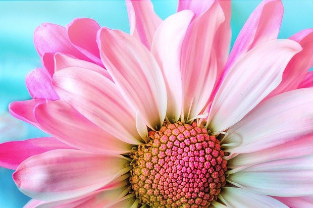How to not be a victim and Empower with pink nature