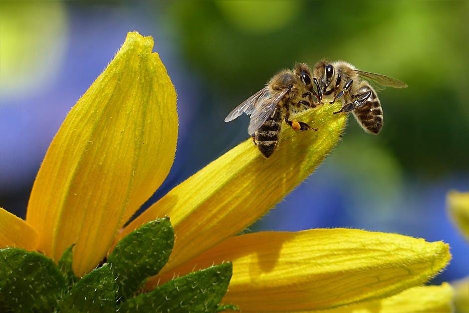 honey bee love