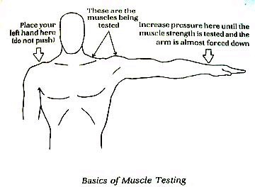 Arm Muscle Testing