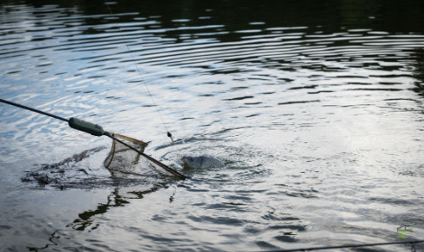How Long can Carp Survive out of Water - Netting Carp