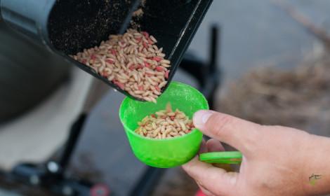 Best Hook Baits for Method Feeder Fishing - man holding handful of driller carp pellets - Maggots in bait box