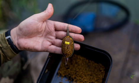 Grass Carp vs Common Carp - Man holding method feeder with mix underneath