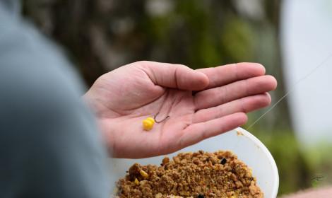 How to catch grass carp  - sweetcorn on fishing hook