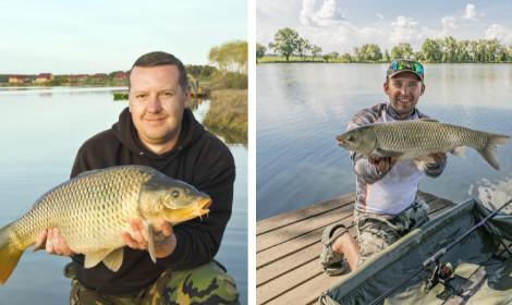 Grass Carp vs Common Carp - Half common carp and half grass carp on picture