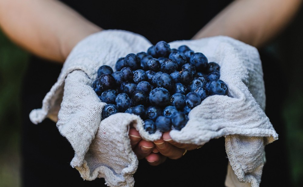 Bluberries improve learning ability