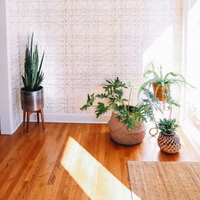plants in sunny room